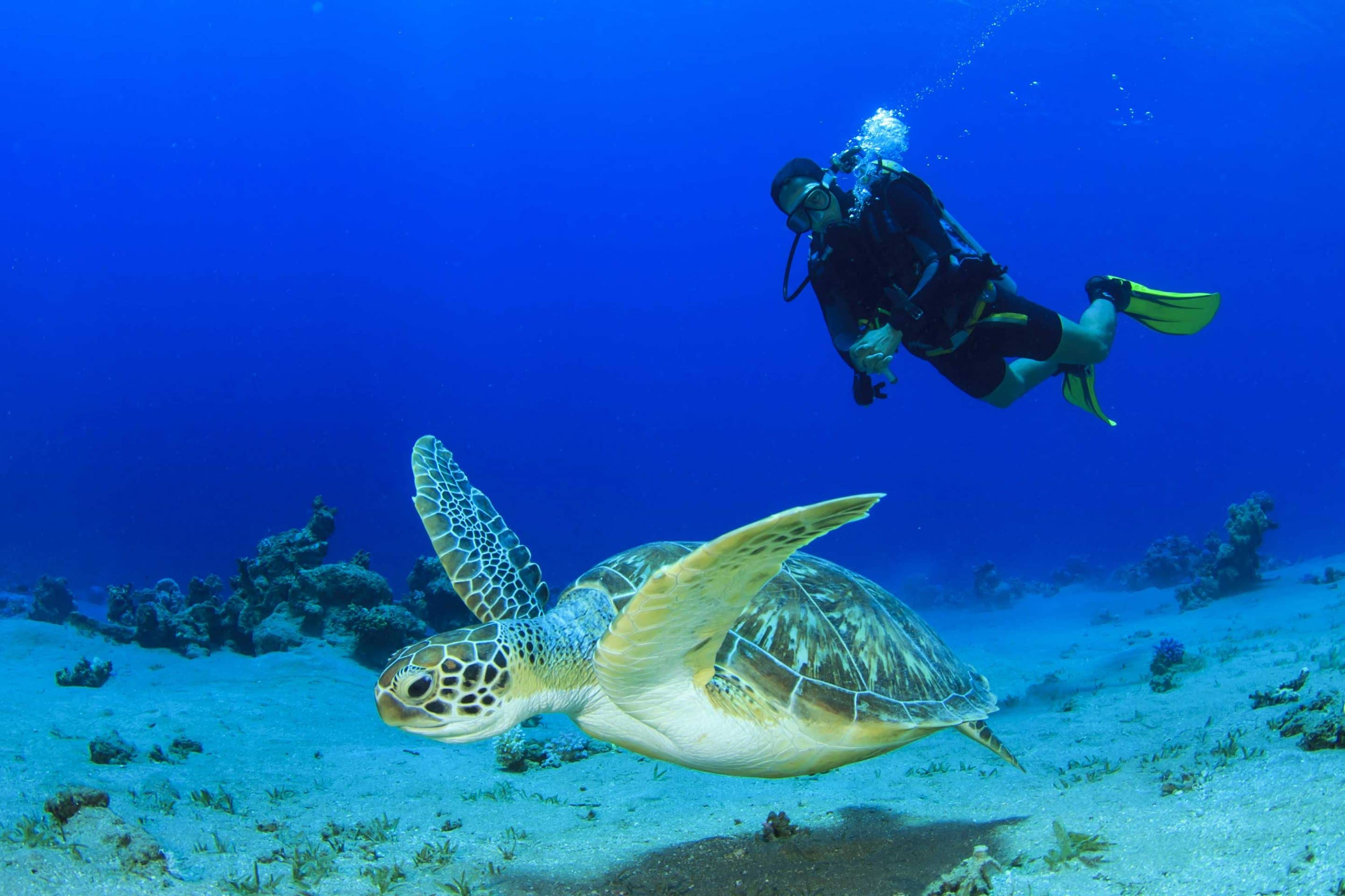 Man Scuba Diving underwater with turtle