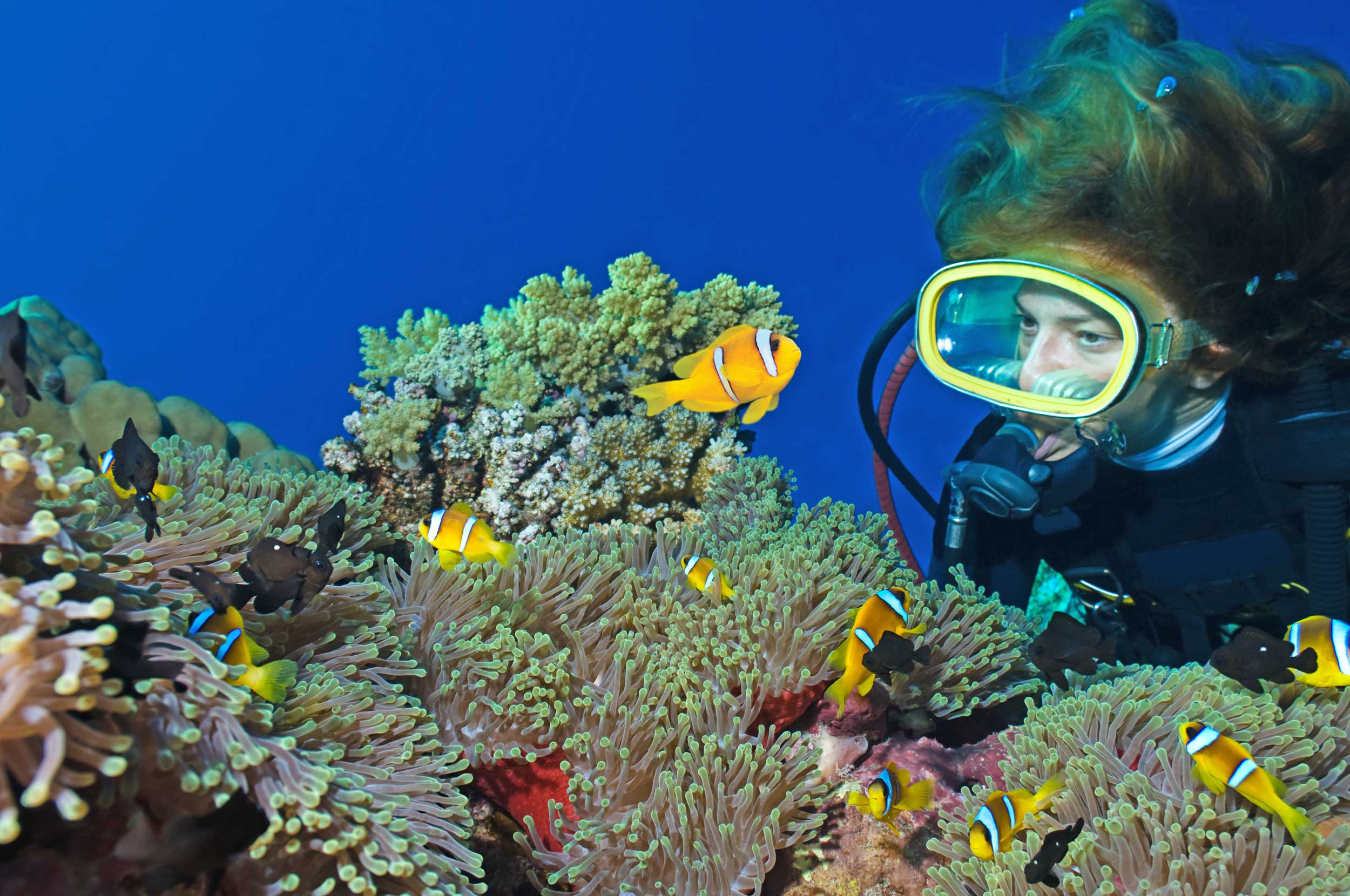 Scuba Diver underwater next to Clown Fish and coral