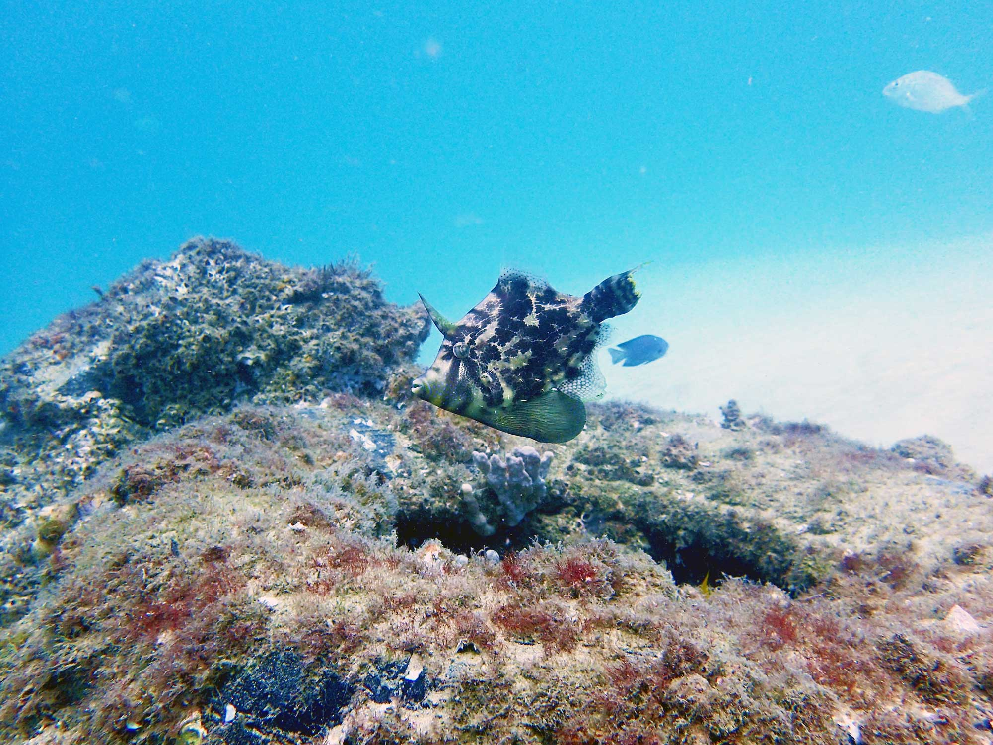Underwater fish & coral on Gold Coast Scuba Dive