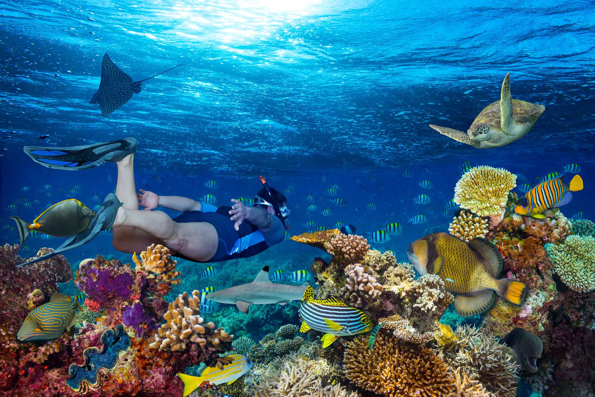 Underwater Great Barrier Reef with coral, fish, turtle and a man snorkeling